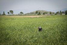 A refugee sits in the fields of Idomeni. Villagers here are concerned that they will not be able to harvest the crops they planted on this land, which has now become home to more than 10,000 people